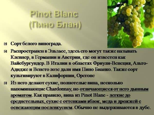 Пино гриджио сорт винограда описание