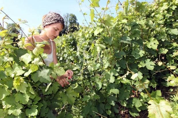 Вино провинции бордо