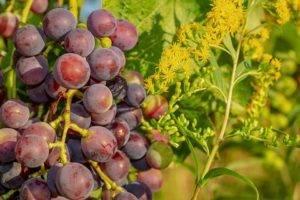 Как определить вино натуральное или порошковое