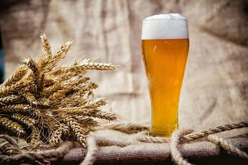Пиво из пшеницы в домашних условиях