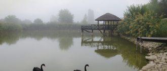 Пуркари молдавия