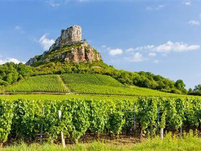 Вино бургундское красное сухое