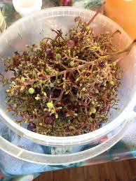 Виноград залить водкой рецепт