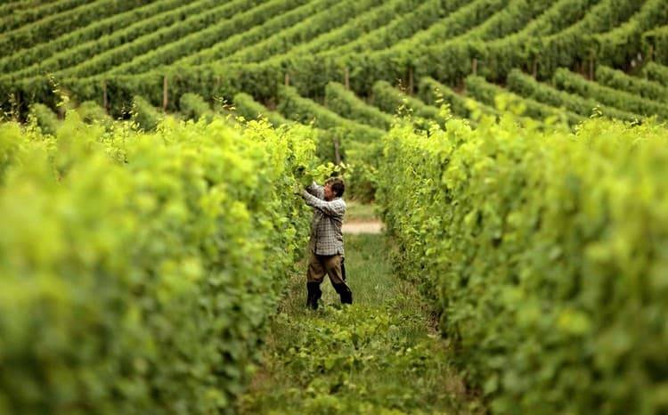 Гранатовое вино азербайджан золотой баку
