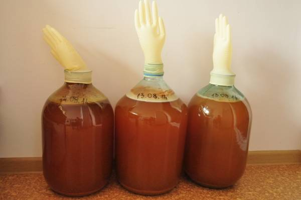 Сделать сидр из яблок в домашних условиях