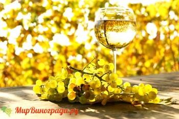 Виноград паломино
