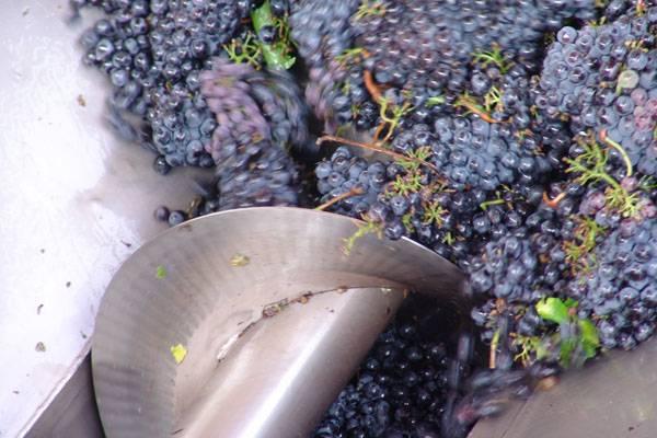 Игристое вино кюве