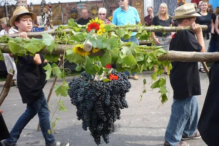 Эгри бикавер вино