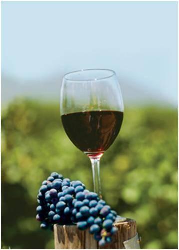 Словарь винодела