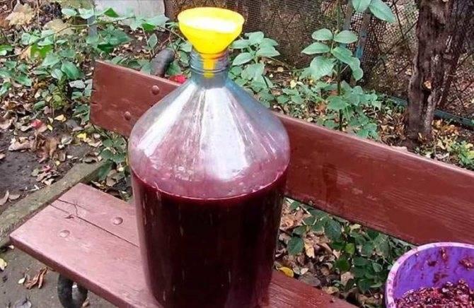 Как сделать чачу из виноградных выжимок